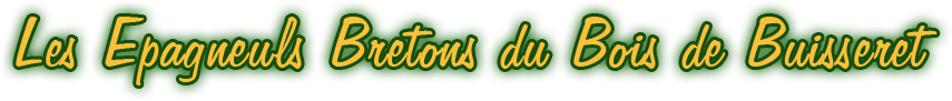 Les Epagneuls Bretons du Bois de Buisseret - Elevage chiens